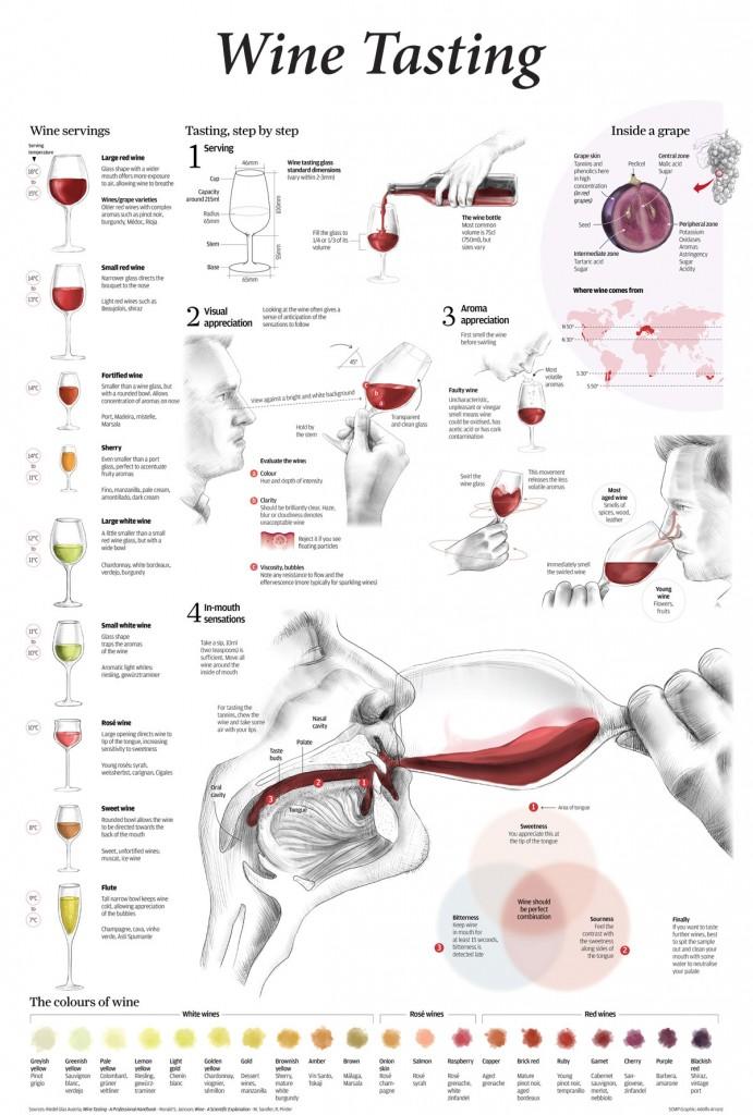 Wine tasting infograph
